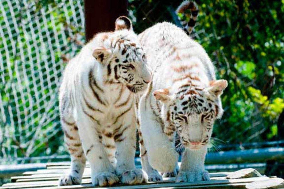 贾迪姆动物园