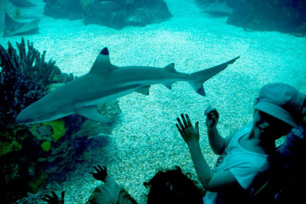 年轻人在里斯博亚海洋与鲨鱼亲密接触。
