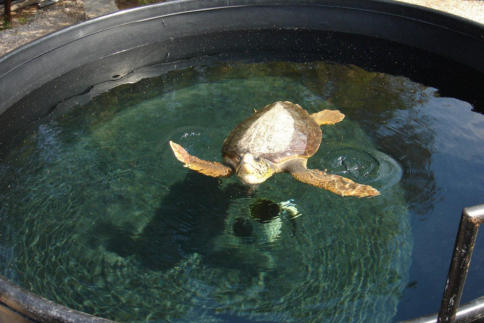 Sea Turtle Protection Society of Greece