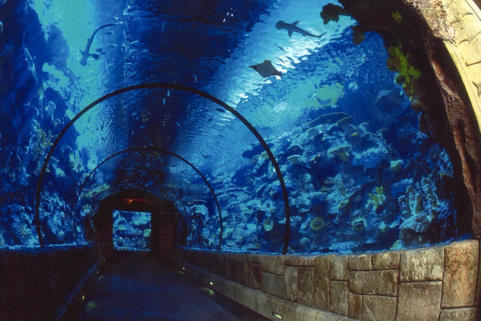 Sea World information for Orlando, Florida including discount tickets, map, reviews, address and hotels nearby from Undercover Tourist.