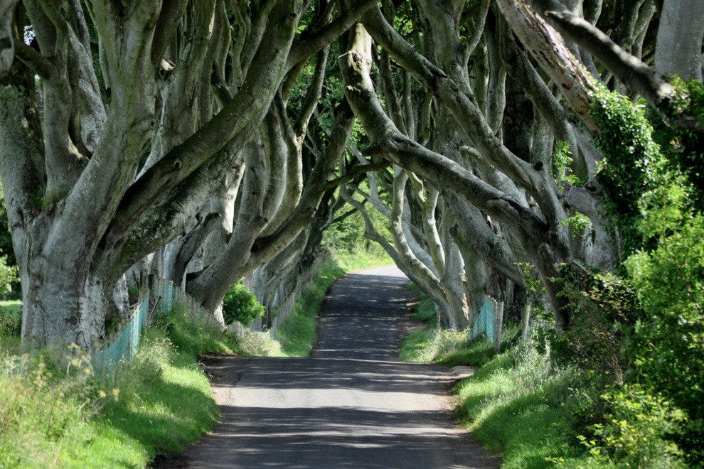 Arya Makes Her Escape Through the Dark Hedges