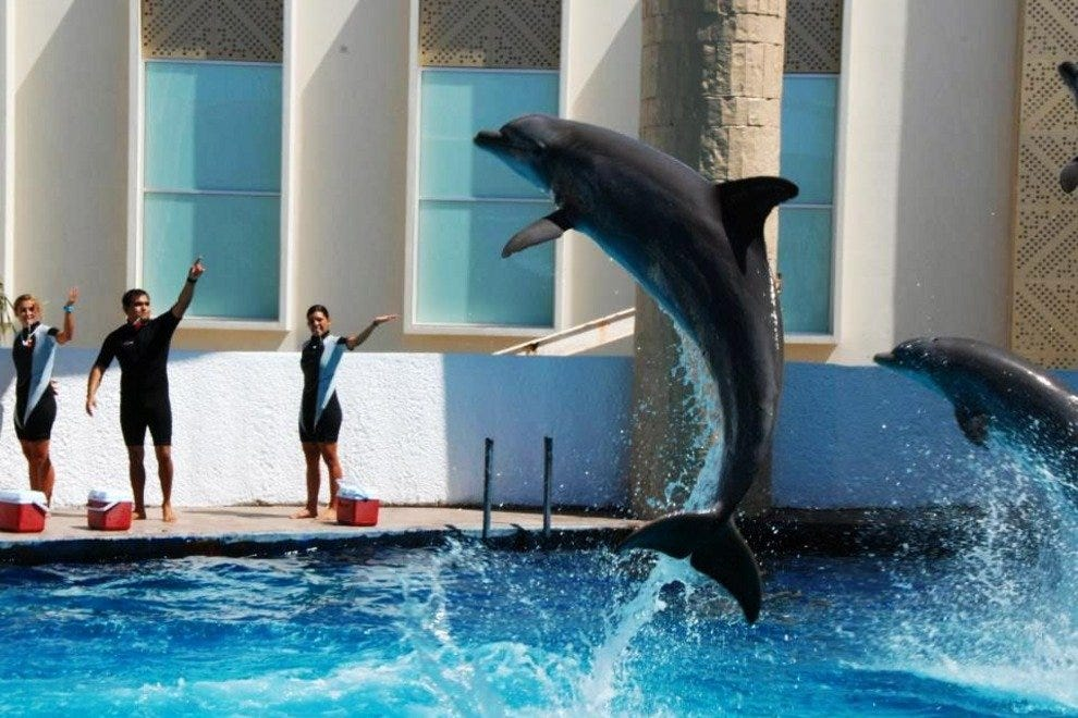 The dolphin show is included in the price of a general ticket