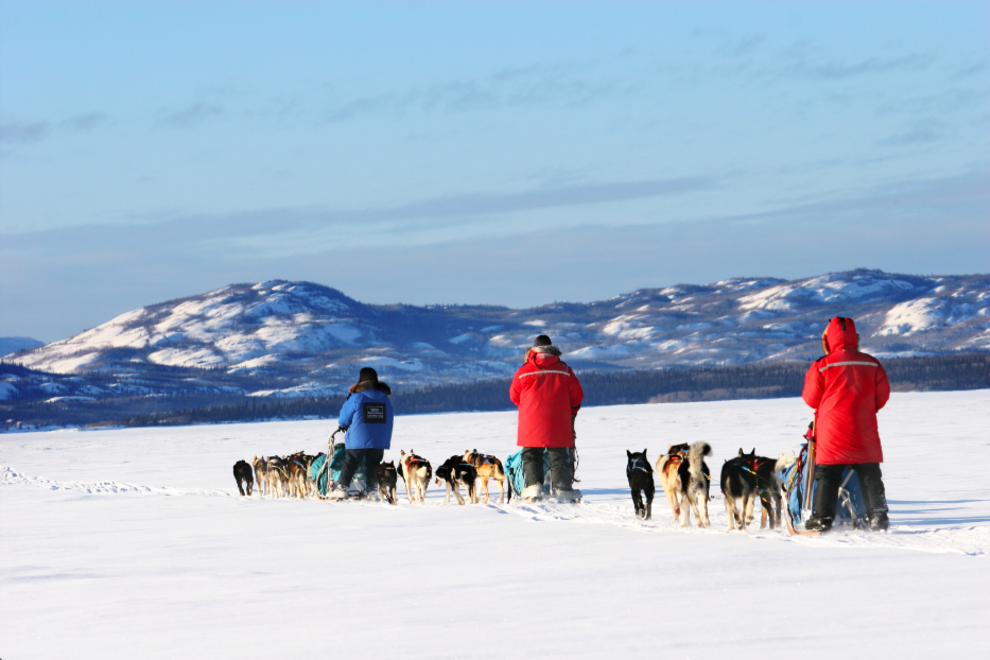 Dog sledding through Yukon Territory