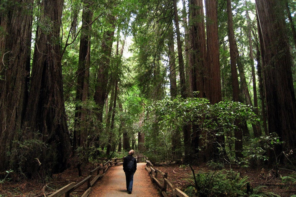 Peace Out Muir Woods National Monument