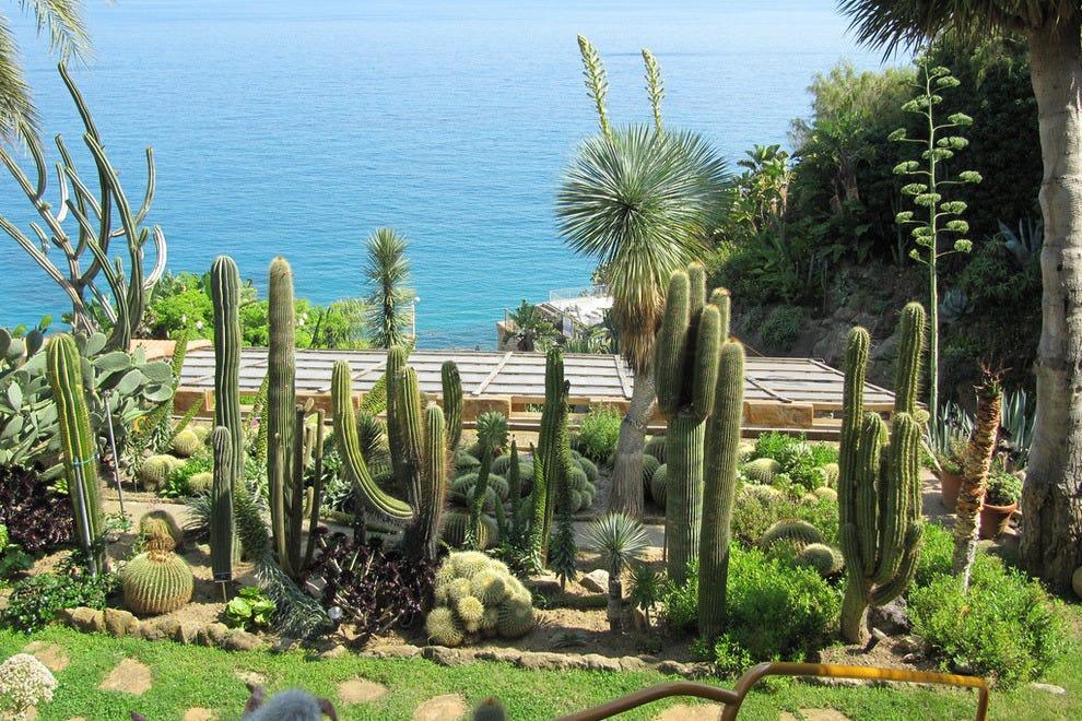 Jardin Exotique cactus garden