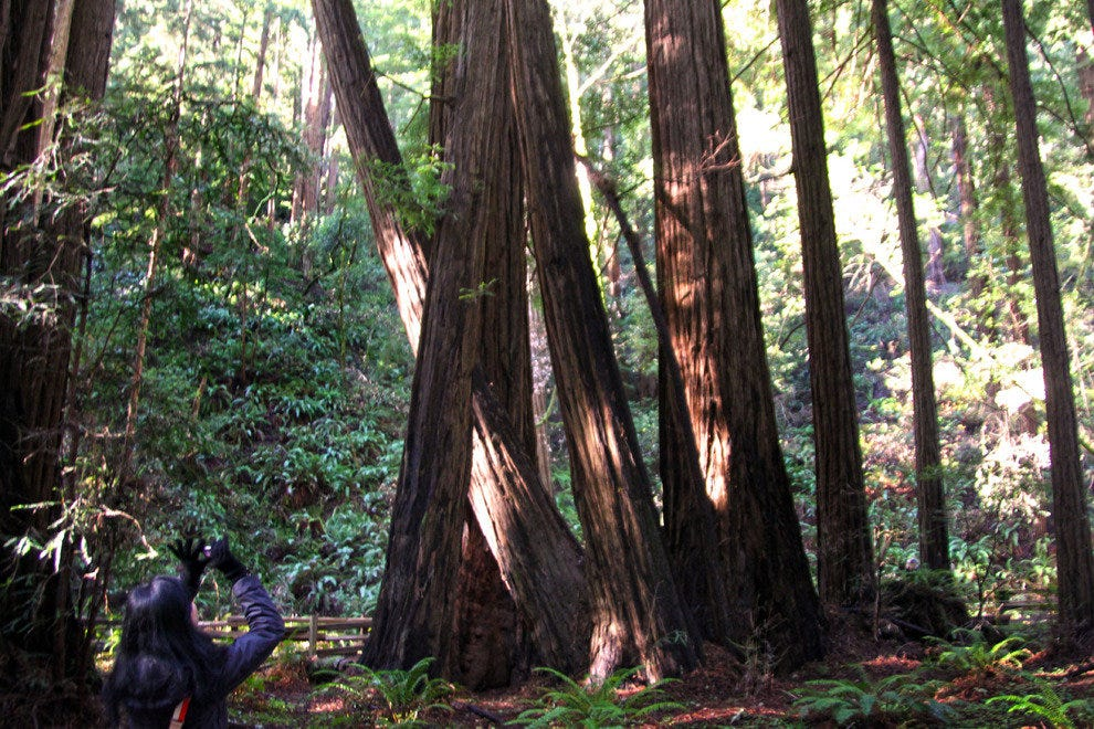 Photographing the Majestic Redwoods at Muir Woods National Monument