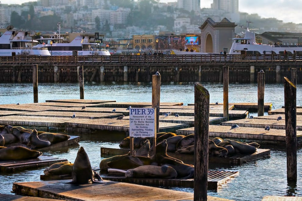 Sea lions bask in the sun on Pier 39