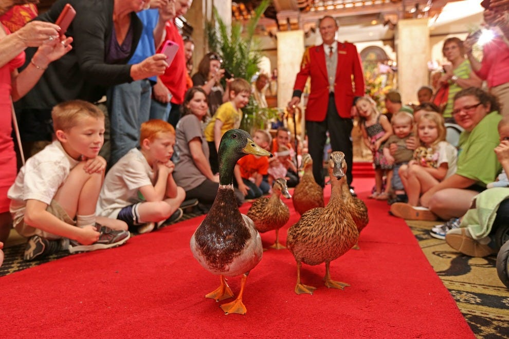 The Peabody Duck March