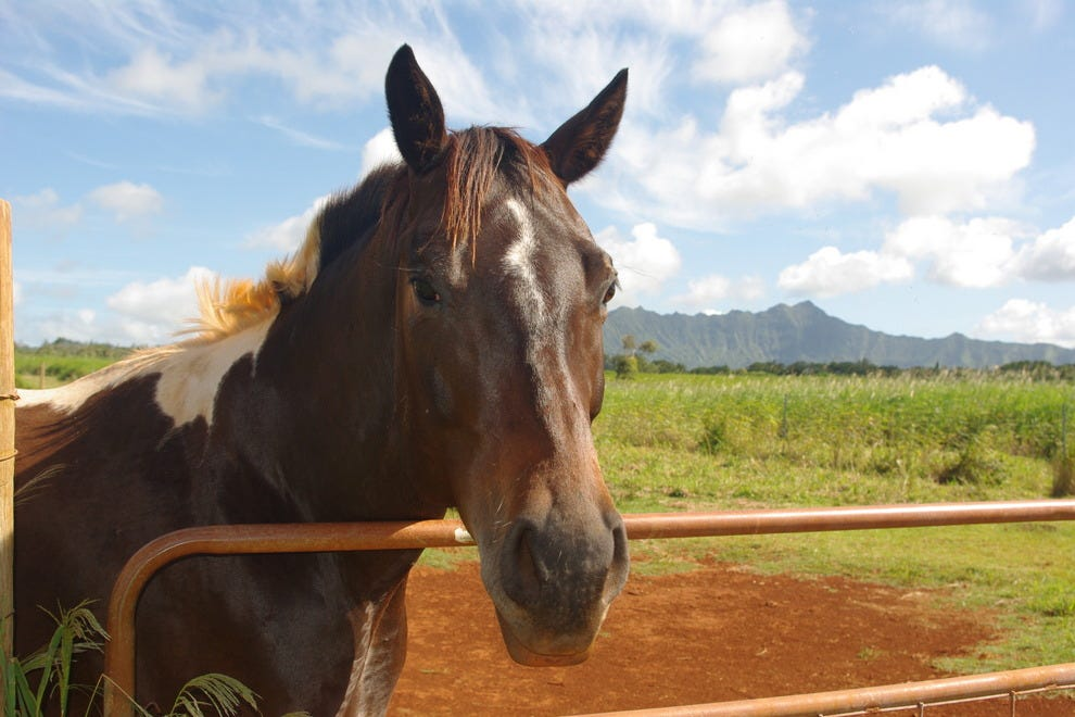 Happy Trails Hawaii Horse Ranch
