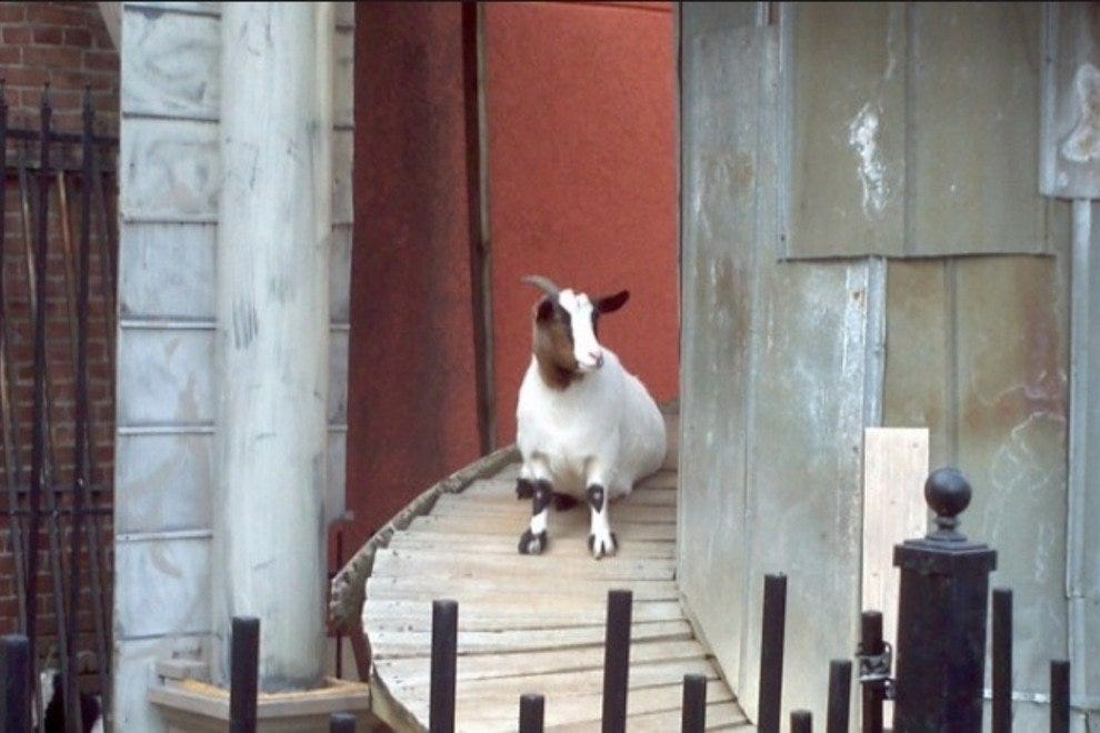 A goat on the tower