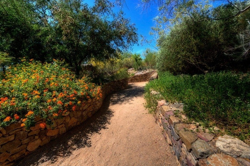 Explore the Arizona Sonora Desert Museum's two miles of walking paths