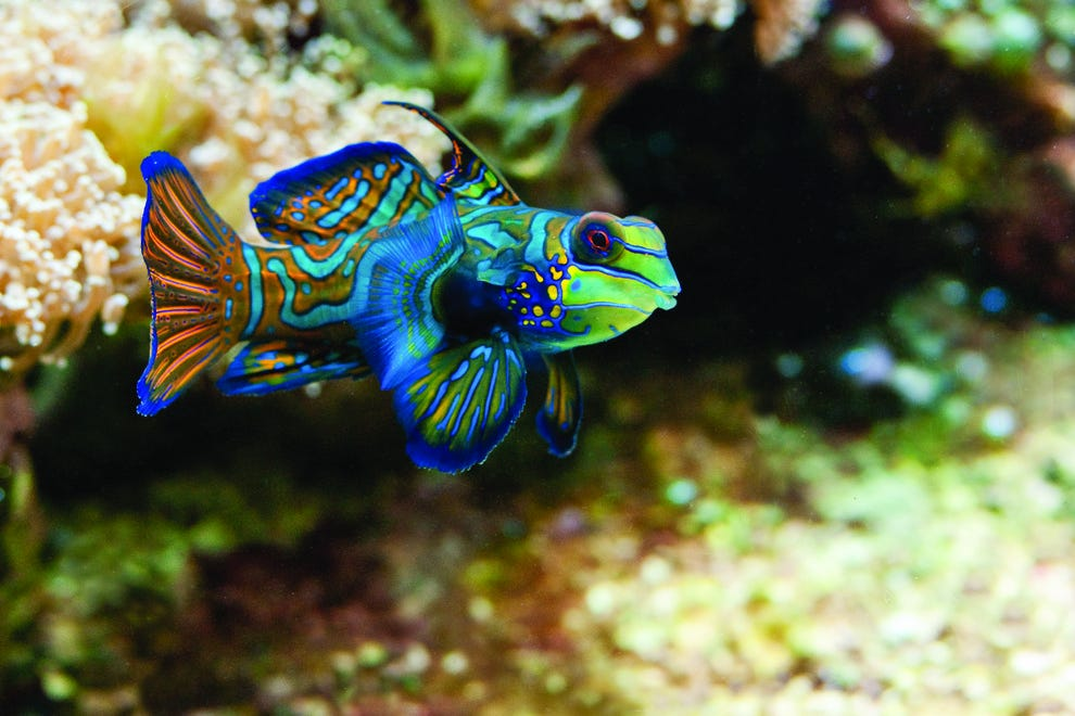 10 craziest fish and where to find them features photo for Where to buy aquarium fish