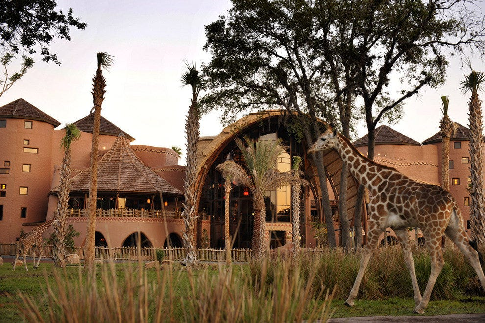 A slice of Africa in Orlando