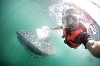 Swim with Whale Sharks: Unforgettable Vacation Experience