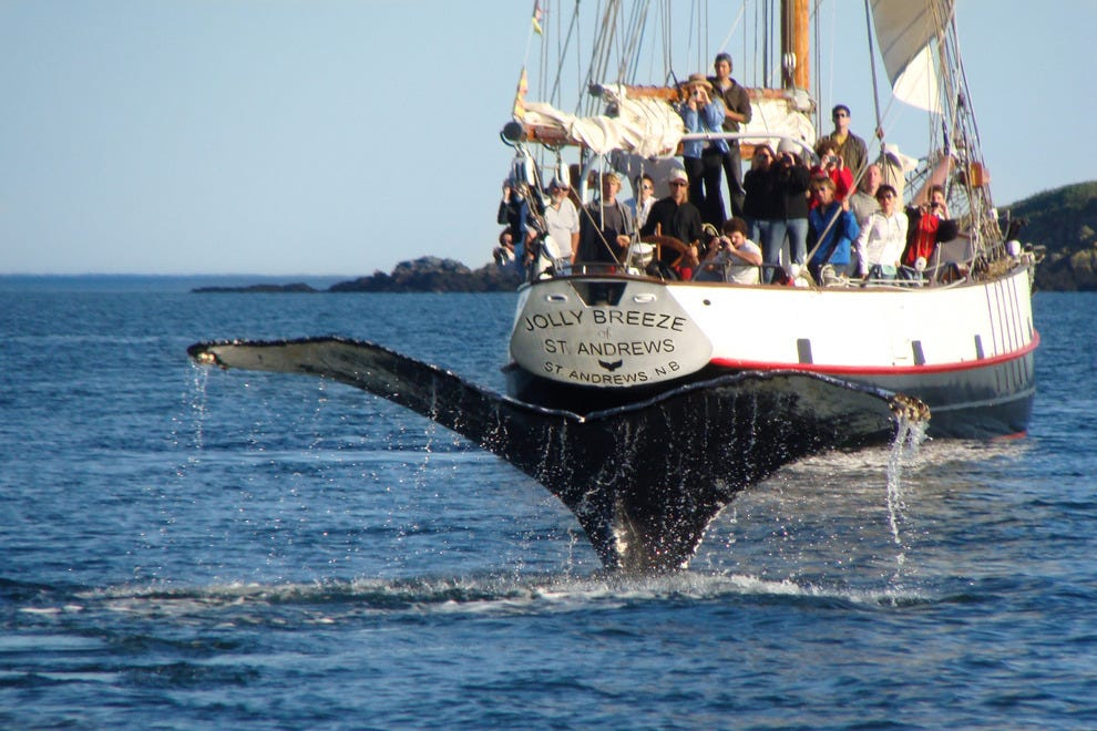 Whale watching in the Bay of Fundy