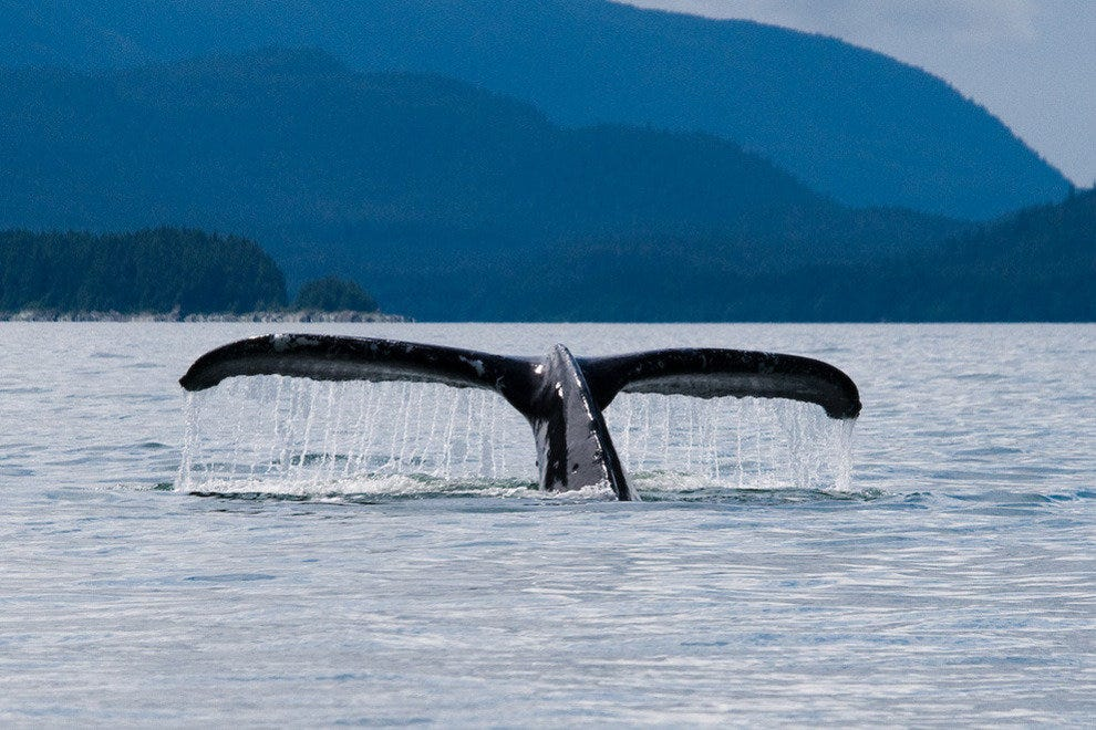 Humpback whale spotted near Juneau