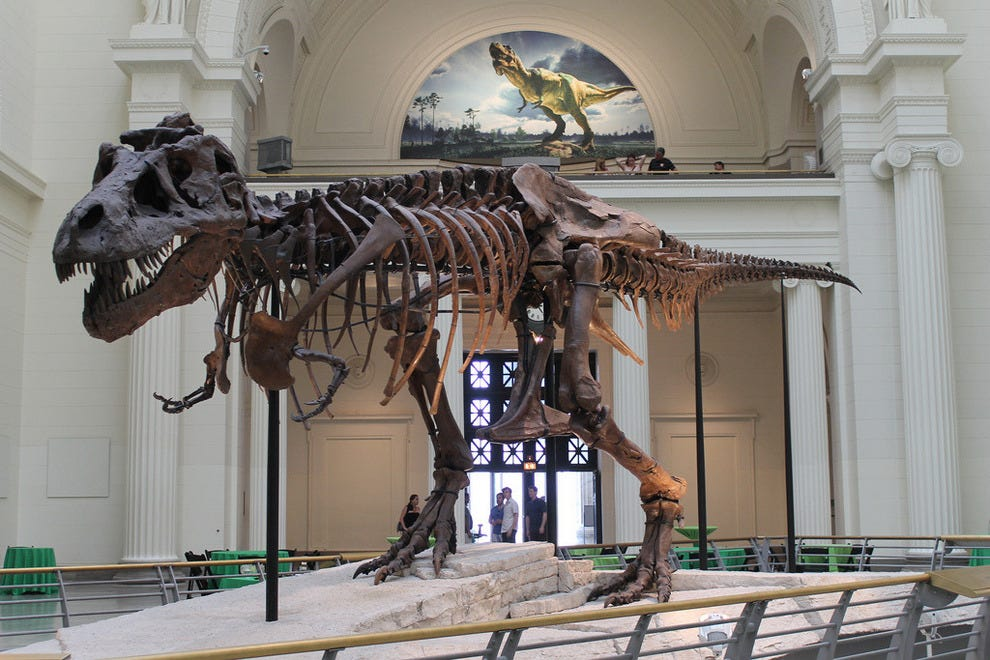 Sue, the world's largest and most complete dinosaur skeleton.