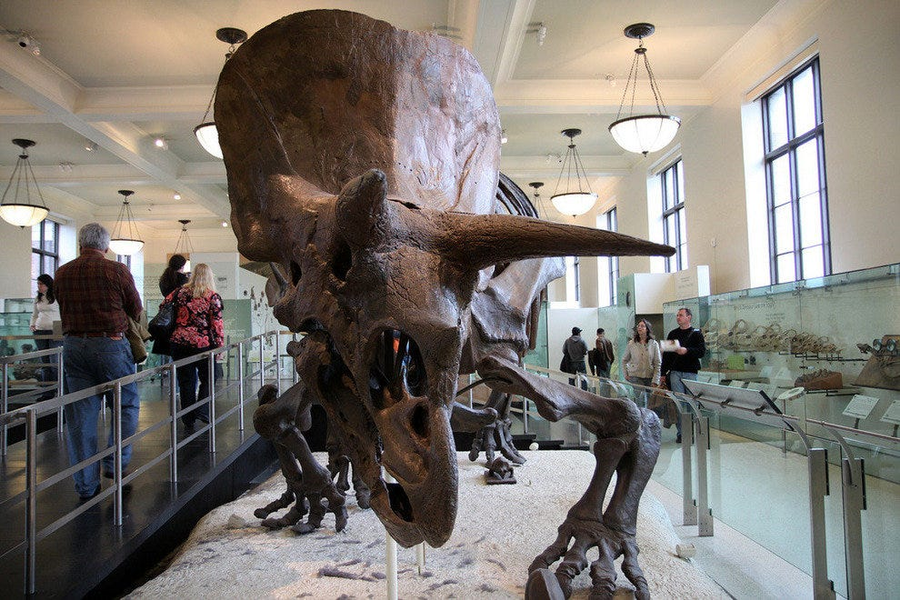American Museum of Natural History in New York City, NY