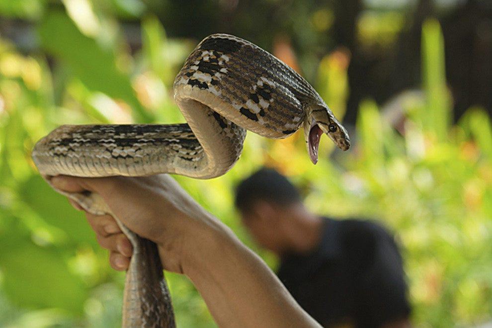 曼谷的索雅巴王后蛇场