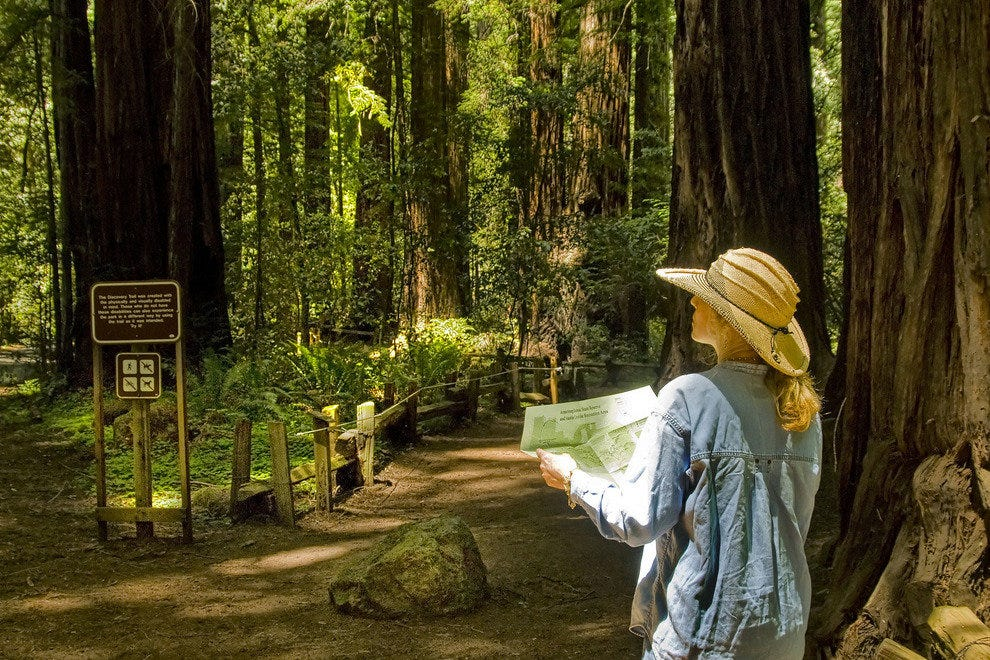 A Nature Lover's Delight:  Sonoma's Towering Redwoods