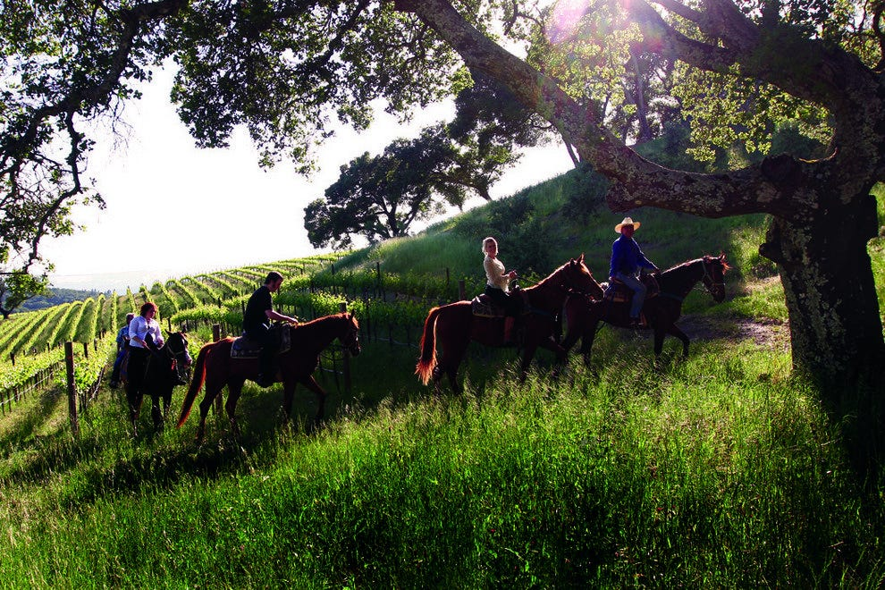 Horseback Riders Among the Vines at Chalk Hill Winery