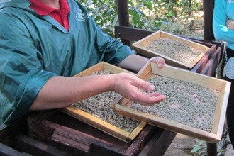 Costa Rica for Coffee Lovers: Best Plantation Tours and Tastings