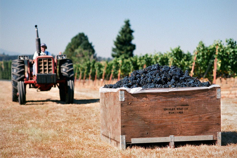 Pinot Noir at Crowley Station Vineyards