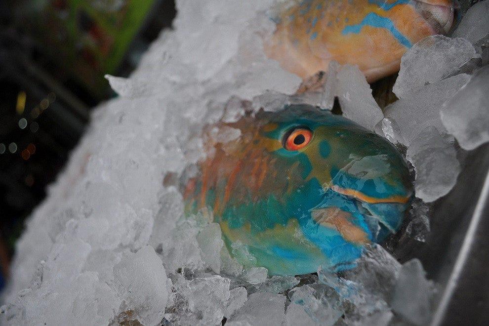 Koloa Fish Market Kauai Restaurants Review 10best Experts And