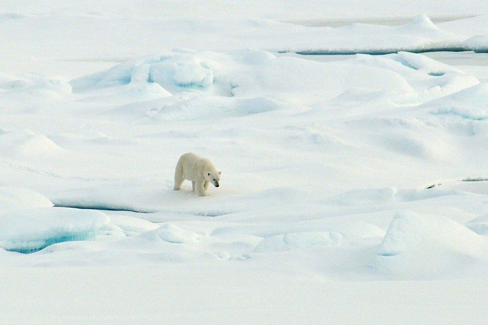 Polar bear on Alaska's Beaufort Sea