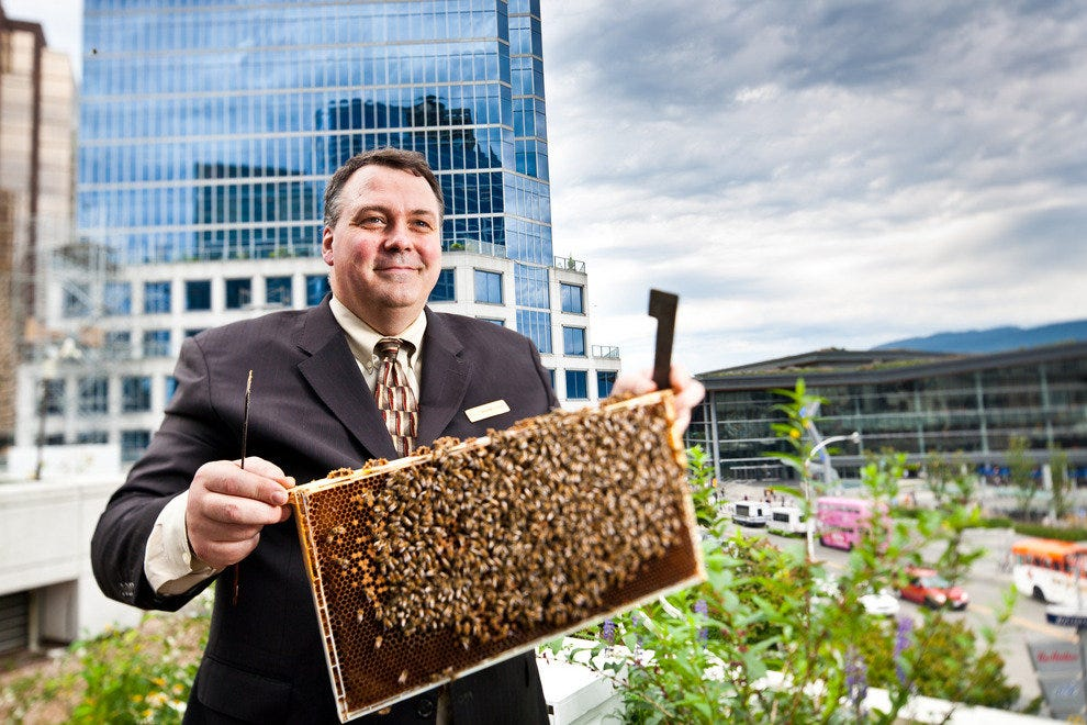 Rooftop bee hives at the Fairmont Waterfront
