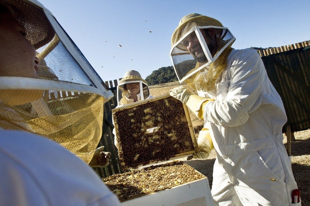 Honey Harvest Weekends at Carmel Valley Ranch