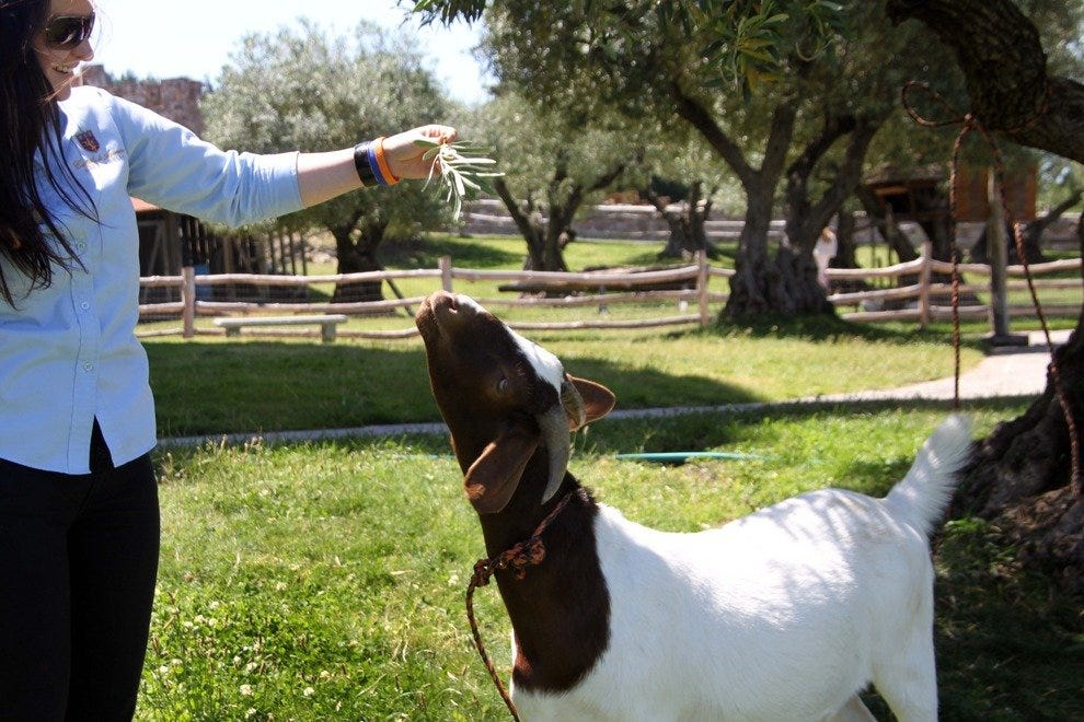 Kids of all ages will enjoy the variety of docile farm animals on the Castello grounds.
