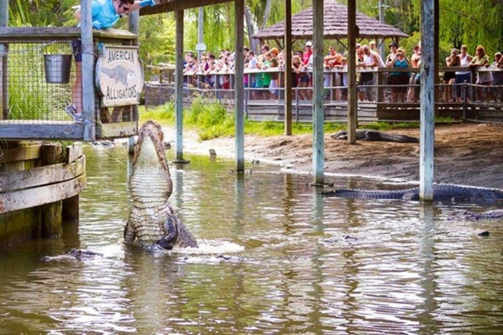 Lunch time at Alligator Adventure