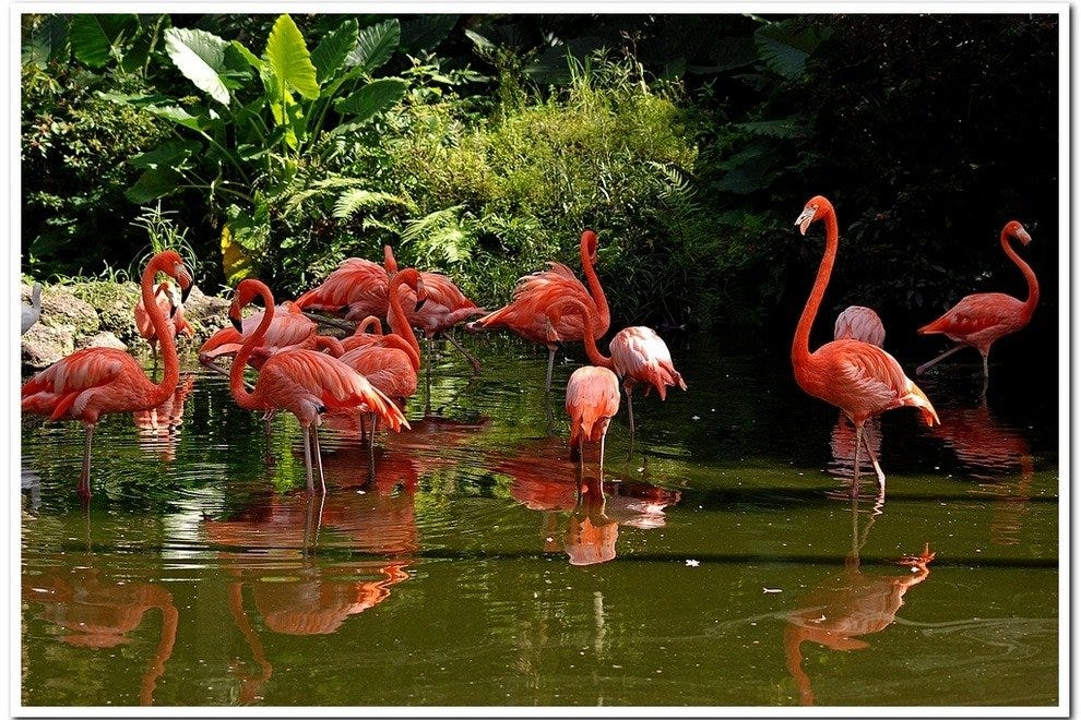 Flamingo Gardens Fort Lauderdale Attractions Review