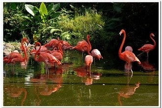 Butterfly world fort lauderdale attractions review 10best experts and tourist reviews for Flamingo gardens fort lauderdale
