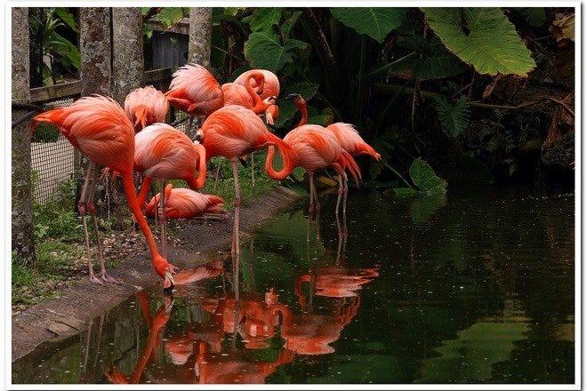 Flamingo Gardens Best Attractions In Fort Lauderdale