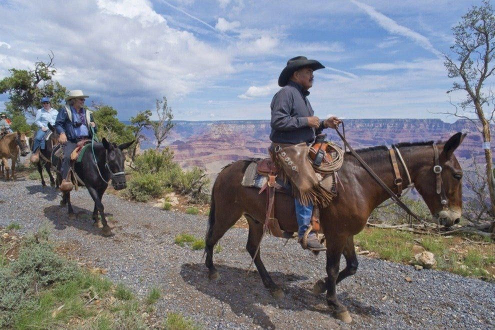 A wrangler leads a tour on the new Canyon Vistas Mule Ride