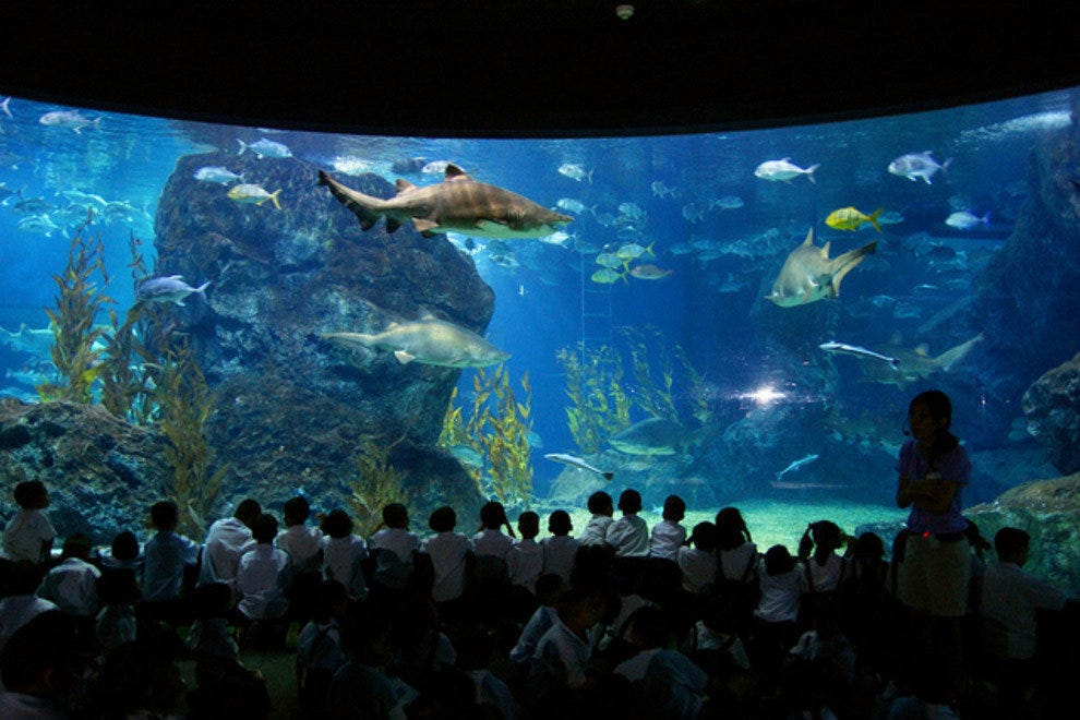 Sea Life Ocean World