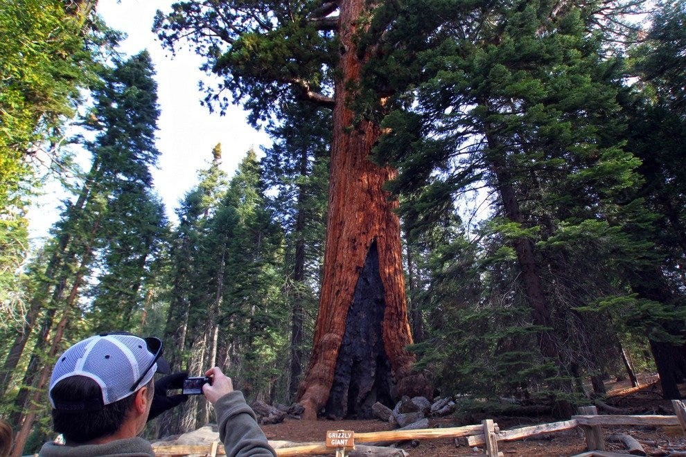 The Grizzly Giant, Mariposa Grove of Giant Sequoias