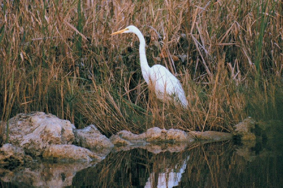 Florida's natural beauty is on display at Hugh Taylor Birch State Park