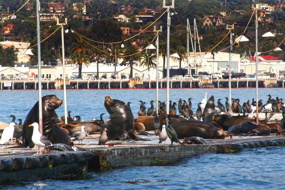 Image result for sea lions bait barge