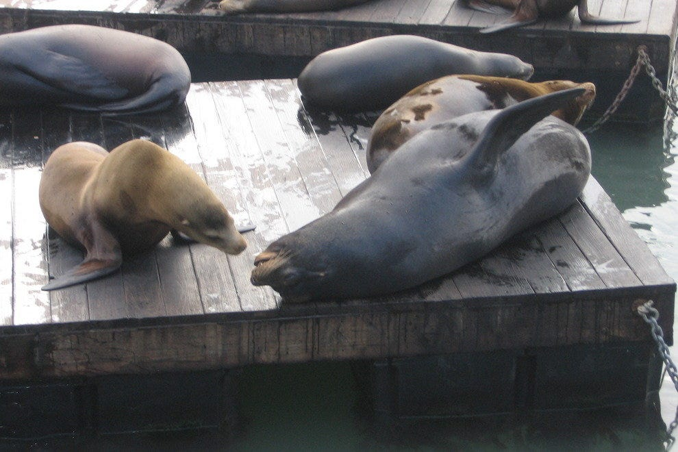 Sea lions enjoy each other's company at Pier 39