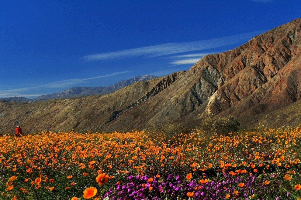 Nature's Springtime Masterpiece: Desert Wildflowers