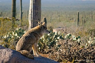 Tucson Free Things To Do Best Attractions Reviews - 10 things to see and do in tucson