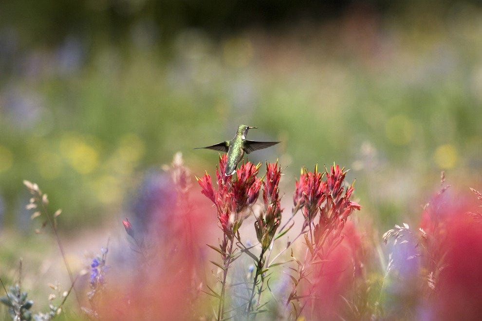 Hummingbird Festival - May 10