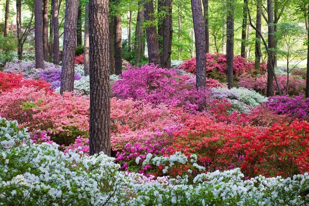 Best public garden winners 2014 10best readers 39 choice - Callaway gardens pine mountain georgia ...