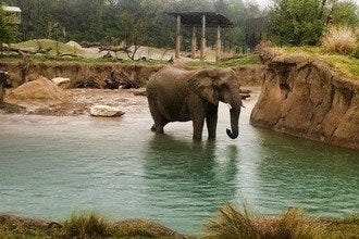 Celebrate Spring and Warm Weather at Dallas Zoo