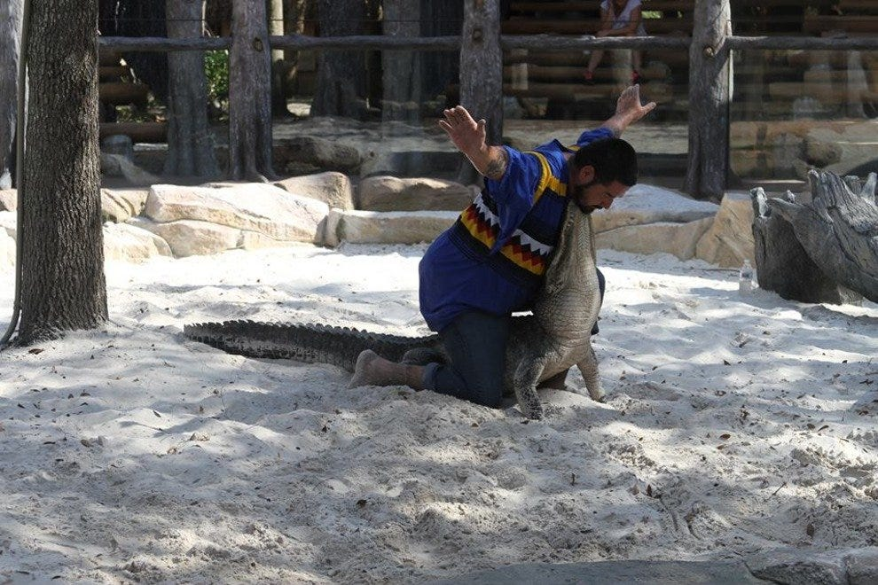 Alligator wrestling is one of the main attractions at Billy's Swamp Safari in the Florida Everglades