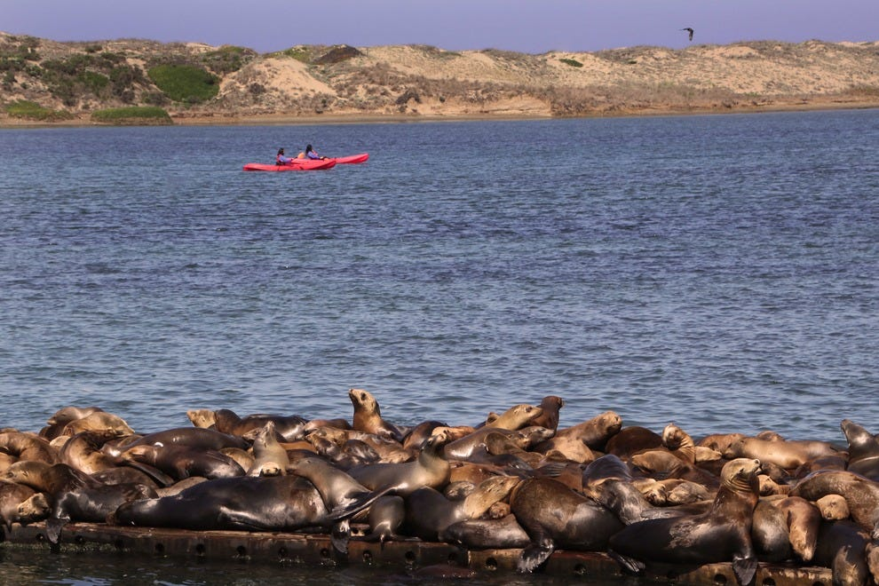 Kayakers and Sea Lions, Elkhorn Slough
