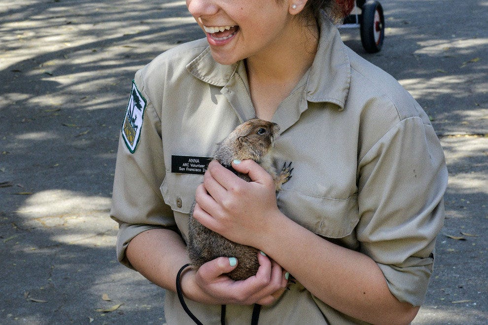 Zoo volunteer with a furry friend
